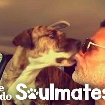 Watch This Guy Reunite With His Pit Bull That Went Missing In Car Crash | The Dodo Soulmates