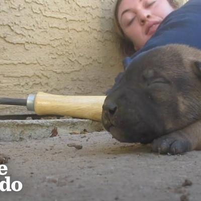 Mama Dog Shows Rescuers Where Her Babies Are Hiding | The Dodo