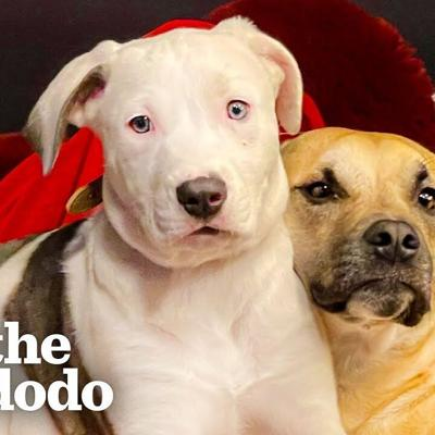 Watch Kalen Allen's Rescue Pups Go From Frenemies To Family | The Dodo You Know Me Now Meet My Pet
