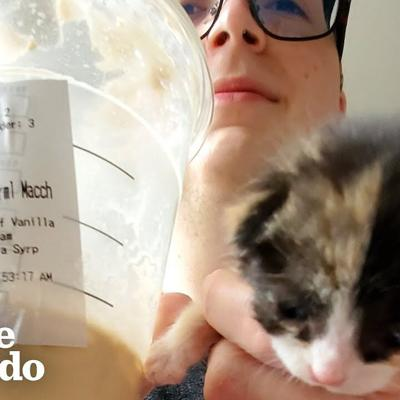 Couple Finds A Tiny Calico Kitten Outside of Starbucks | The Dodo