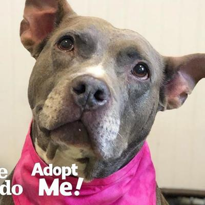 Let's Help This Dog Find A Fome After 7 Years In The Shelter | The Dodo Adopt Me!
