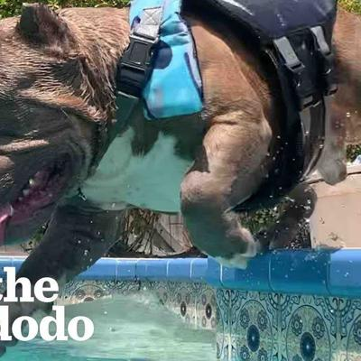 Pittie Has One Obsession In Life: Swimming | The Dodo Pittie Nation