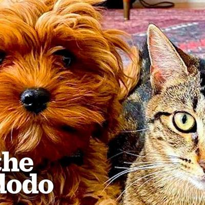 Kitten Refuses to Share Her New Puppy Sister with Anyone | The Dodo Odd Couples
