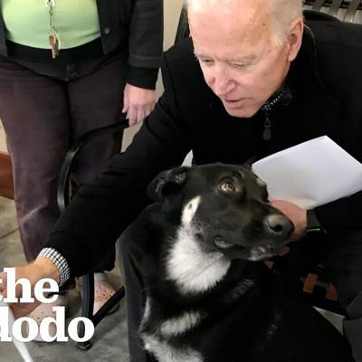 Rescue Puppy Gets Adopted By Joe Biden | The Dodo