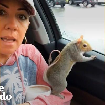 Woman Takes Her Rescue Squirrel Everywhere She Goes | The Dodo