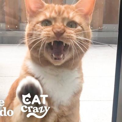 Life With A Cat | The Dodo Cat Crazy