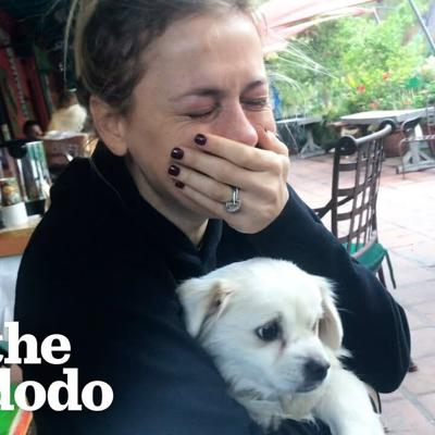 Iliza Schlesinger Cries Happy Tears Meeting New Rescue Dog | The Dodo You Know Me Now Meet My Pet