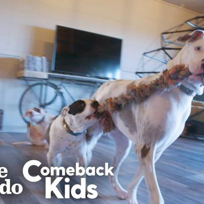 119-Pound Dog With Bad Feet Had To Tiptoe Everywhere — Watch Her Run! | The Dodo Comeback Kids