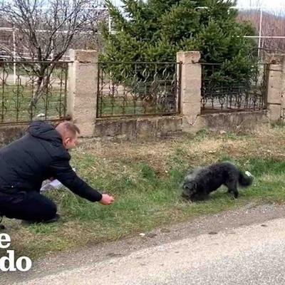 Dog Abandoned On The Road Falls In Love With His Rescuer | The Dodo