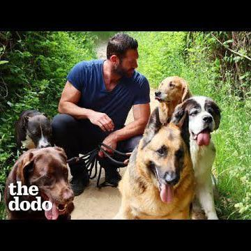 Hike With The World's Best Dog Dad And His 9 Rescue Dogs!  | The Dodo Airbnb Experiences