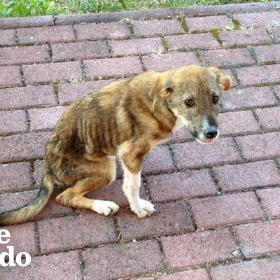 Stray Puppy Knew Exactly Who Could Save His Life | The Dodo Faith = Restored