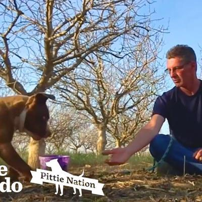 Patient Man Takes 4 Months to Rescue Abandoned Mama Pittie   The Dodo Pittie Nation