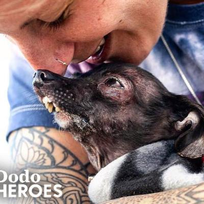 Woman Keeps Rescuing All The Dogs No One Else Wants   The Dodo Heroes