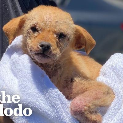 Mangey Puppy Who Couldn't Walk Hops Around Like A Bunny Now | The Dodo Little But Fierce