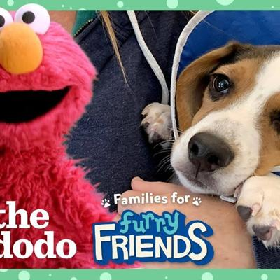 Elmo Helps Find A Rescue Puppy The Perfect Forever Family With Dodo Kids + Sesame Street