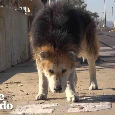 Senior Dog Turns Into Puppy Again Once Rescued | The Dodo