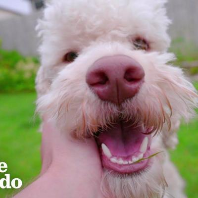 There's A Scientific Reason Why We Love Dogs So Much | The Dodo