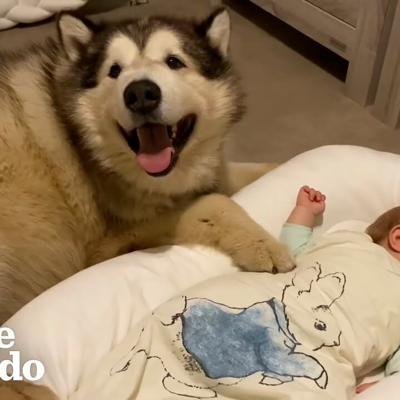Giant Dog Is Obsessed With His Tiny Human Sister | The Dodo