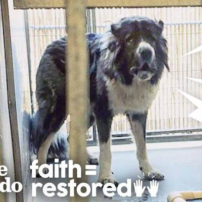 Aggressive Dog Learns How To Trust People | The Dodo Faith = Restored