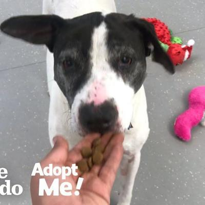 Senior Dog Tied To A Pole Just Wants To Be Loved | The Dodo Adopt Me!