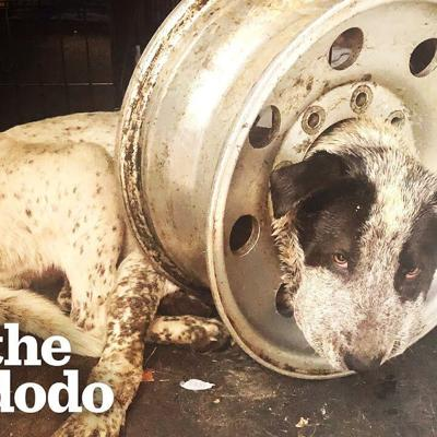 Dog Is Freed From Giant Tire On His Head | The Dodo Adopt Me!