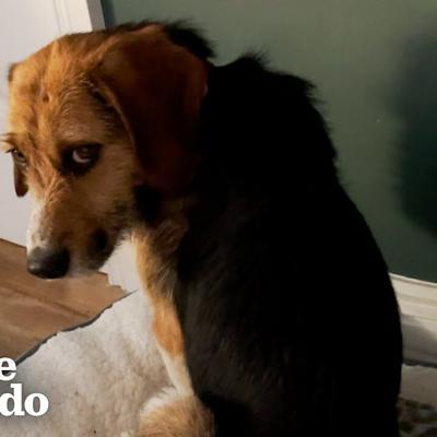 This Dog Stared At The Wall For Hours Until Finally Realized He Was Home | The Dodo Faith Restored