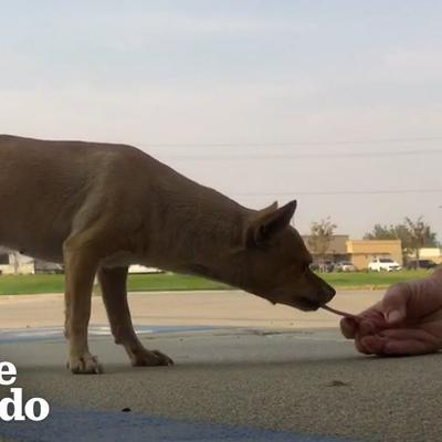 Dog Who Lived In Parking Lot For Years Wags Her Body Nonstop Now | The Dodo Faith = Restored