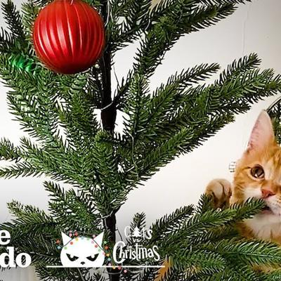Cutest Little Kitten Decides To Take Down Christmas Decorations | The Dodo