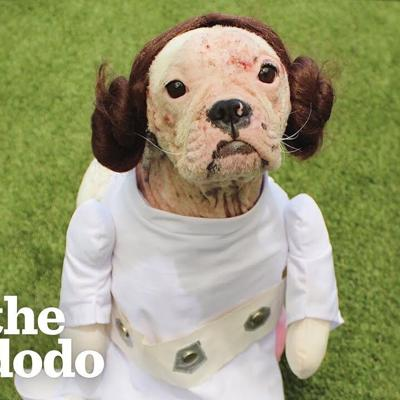 Dog Too Delicate To Be Touched Does Somersaults Now | The Dodo Foster Diaries