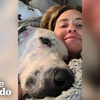 100-Pound Great Dane Had No Idea How To Cuddle Until... | The Dodo Foster Diaries