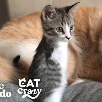 This Tiny Kitten Grows Up Racing Around Her House Like A T-Rex | The Dodo Cat Crazy