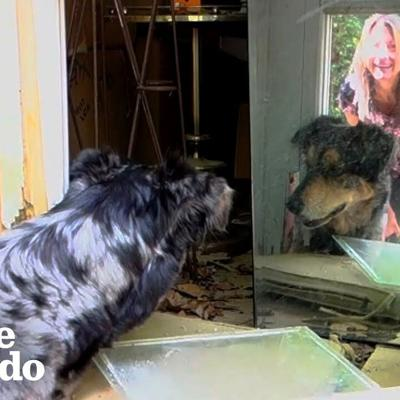 Dogs Lead Parents To The Baby Animal Stuck In Their Shed | The Dodo