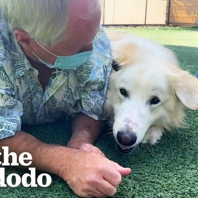 115-Pound Great Pyrenees Keeps Getting Adopted And Returned Until ... 😍 | The Dodo Adoption Day
