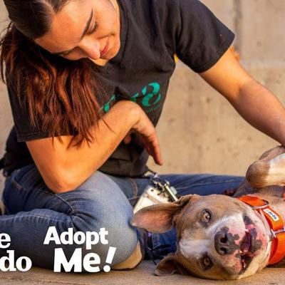Terrified Neglected Dog Turns Super Sweet | The Dodo Adopt Me!