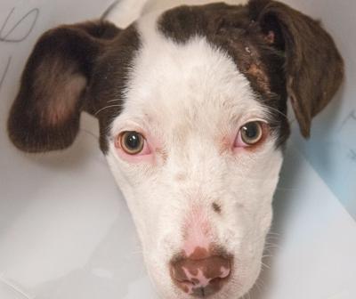 Kaufman Lake dog rescue2