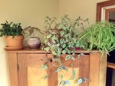ITG overwintering houseplants