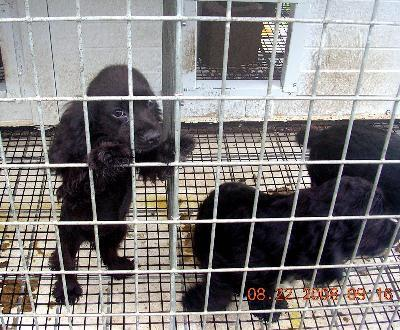 Puppies seized from farm in rural Arthur | News | news