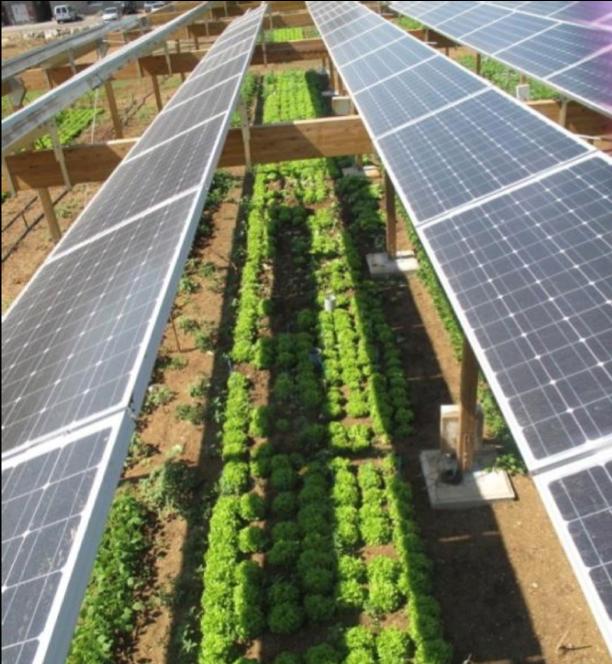 Agrivoltaic array