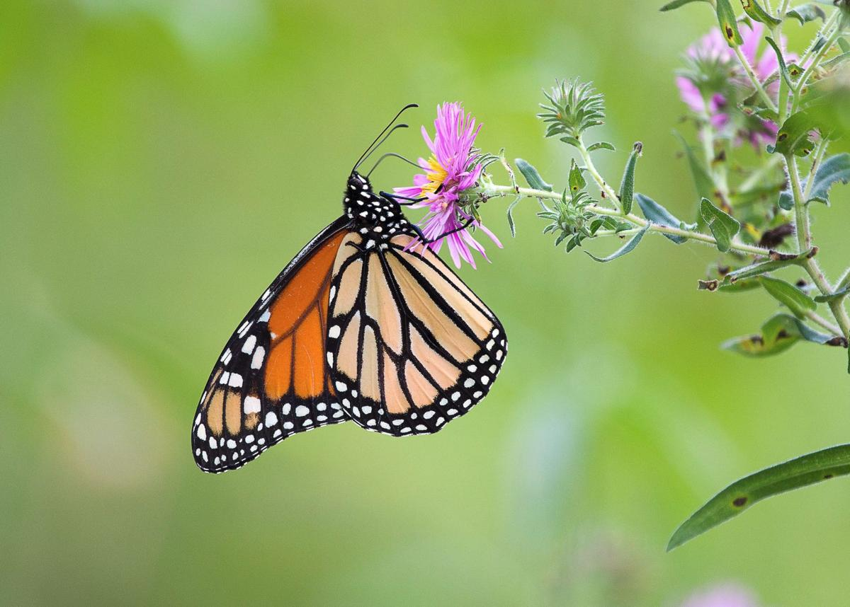 Environmental Almanac | Creatures hunker down for winter in variety of ways