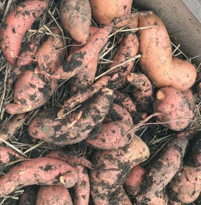 ITG sweet potatoes