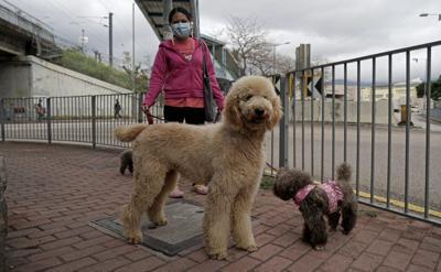 Virus_Outbreak_Pets_Hong_Kong_