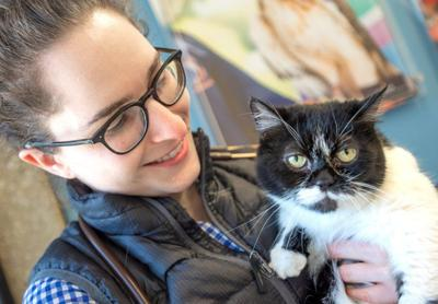 UI cat faces survey