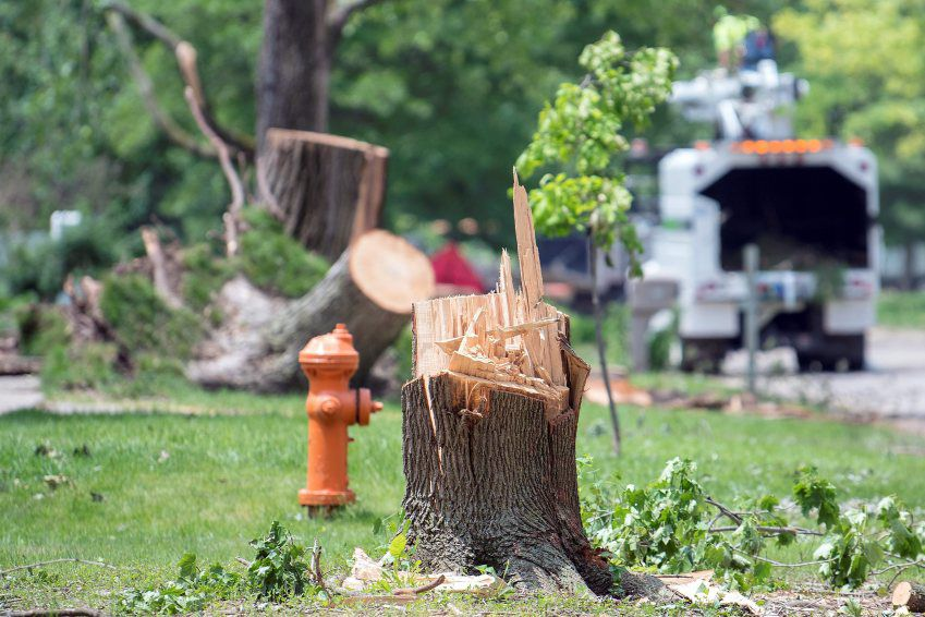 storms cleanup costs Champaign