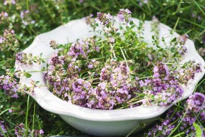 In the Garden: Thyme heals all wounds | Local News | news