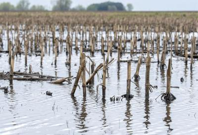 Wet stretch leaves fields soggy and farmers anxious