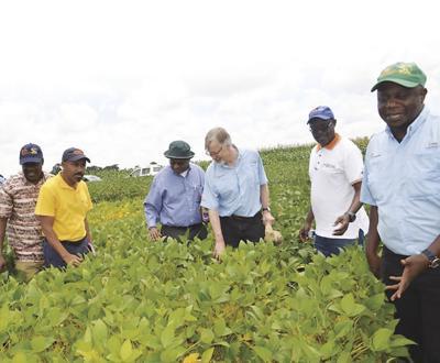 Soybeans in Malawi