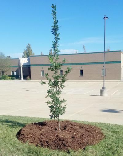 ITG tree-planting follow-up