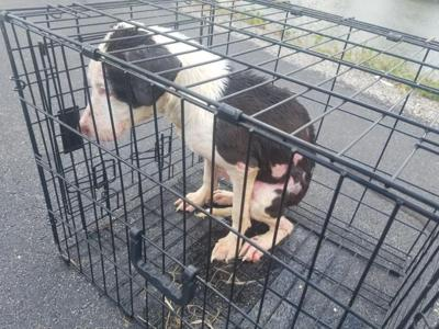 UPDATE: Teacher rescues puppy trapped in cage in frigid lake