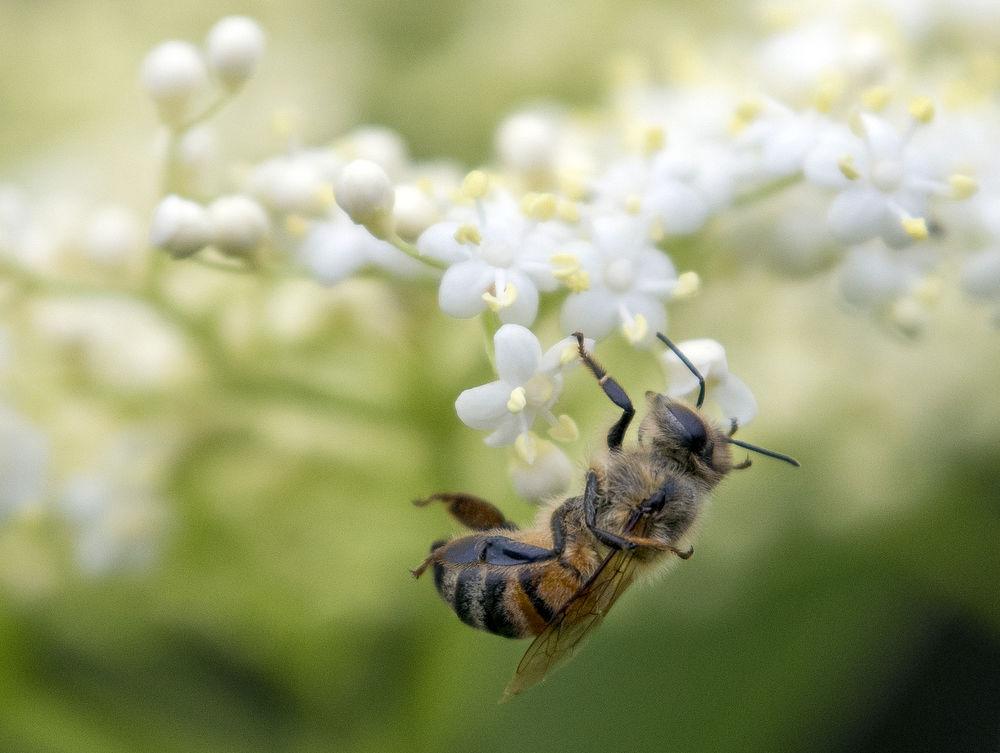 20180612 loca Pollinators 5498.jpg