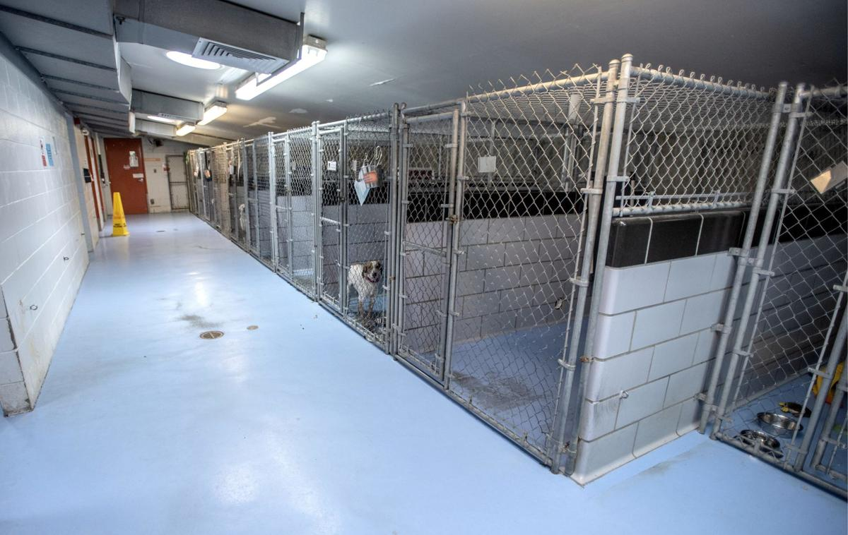 Plans for Champaign County Humane Society expansion focus on animals' well-being